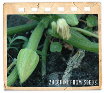 04_22_zucchini